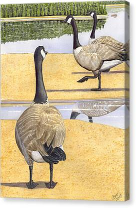 Struttin Thier Stuff Canvas Print by Catherine G McElroy