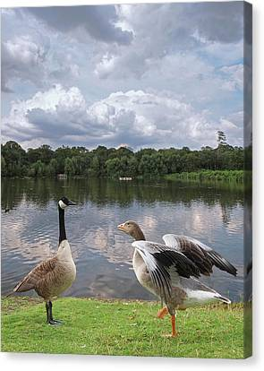 Strutting Their Stuff - Geese At The Lake Canvas Print by Gill Billington
