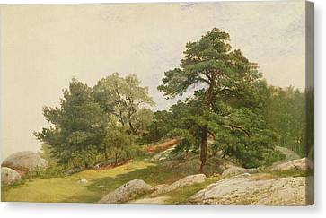 Study For Trees On Beverly Coast Canvas Print by John Frederick Kensett