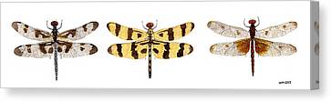 Study Of A Banded Pennant A Halloween Pennant And A Calico Pennant  Canvas Print
