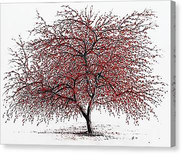 Study Of A Choke Cherry Tree Canvas Print