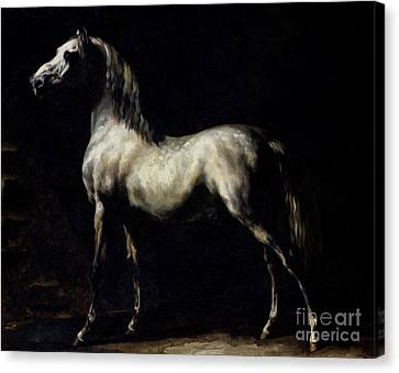 Study Of A Dapple Grey Canvas Print by Theodore Gericault