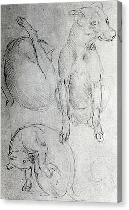 Study Of A Dog And A Cat Canvas Print