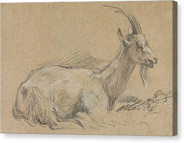 Goat Canvas Print - Study Of A Goat by Thomas Gainsborough