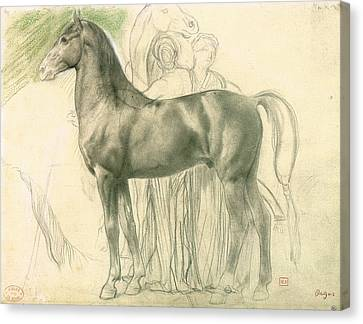 Study Of A Horse With Figures Canvas Print by Edgar Degas