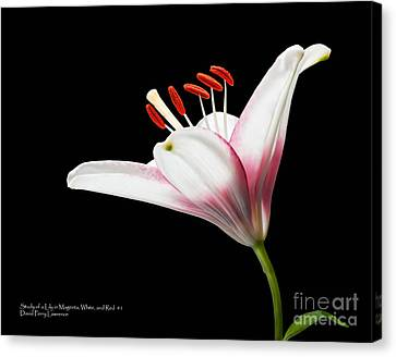 Canvas Print featuring the photograph Study Of A Lily In Magenta, White, And Red #1 By Flower Photographer David Perry Lawrence And Red #2 by David Perry Lawrence