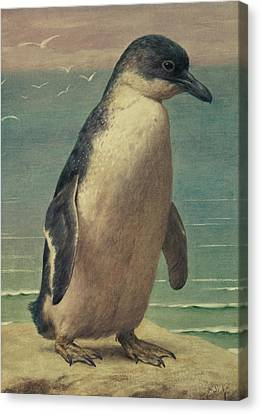 Study Of A Penguin Canvas Print by Henry Stacey Marks