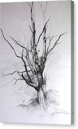 Canvas Print featuring the drawing Study Of A Tree by Harry Robertson