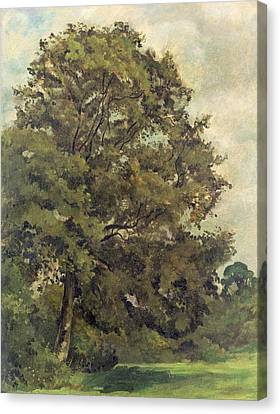 Study Of An Ash Tree Canvas Print by Lionel Constable