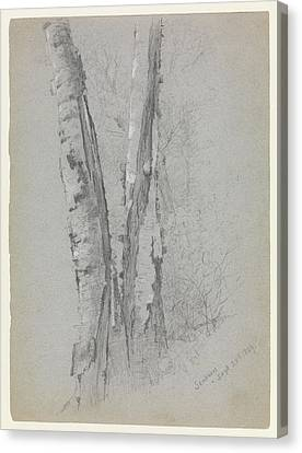 Study Of Birch Trunks Scribners' Canvas Print by Jervis McEntee