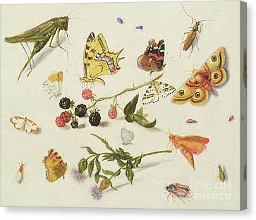 Nature Study Canvas Print - Study Of Insects, Flowers And Fruits, 17th Century by Ferdinand van Kessel