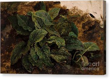 Study Of Leaves Canvas Print by MotionAge Designs