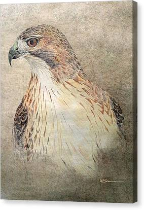 Native American Spirit Portrait Canvas Print - Study Of The Red-tail Hawk by Leslie M Browning