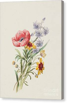 Pencil On Canvas Print - Study Of Wild Flowers by English School