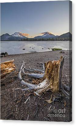 Stump In Morning On Sparks Lake Canvas Print
