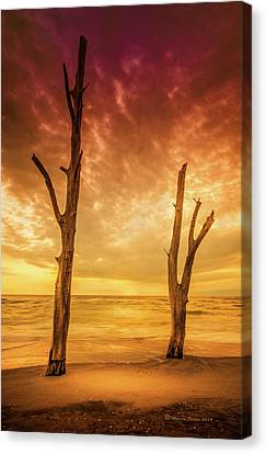 Dead Tree Canvas Print - Stump Pass by Marvin Spates