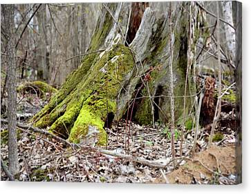Stump With Moss Canvas Print by Sean Seal