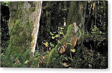 Stump Wyeth Canvas Print by Larry Darnell