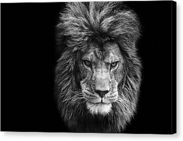 Stunning Black And White Portrait Of Barbary Lion On Black Background Canvas Print