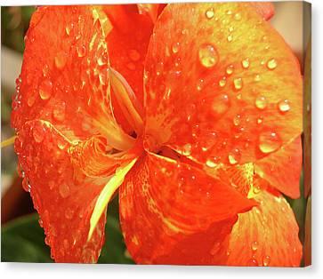Stunning Canna Lily Canvas Print by Karen Nicholson