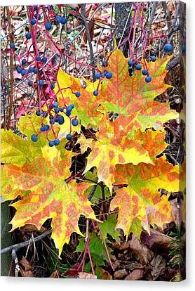 Stunning October Canvas Print by Will Borden