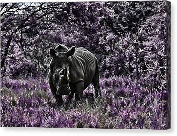 Styled Environment-the Modern Trendy Rhino Canvas Print