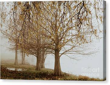 Canvas Print featuring the photograph Sublime by Iris Greenwell