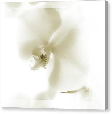 Subtle Orchid Canvas Print