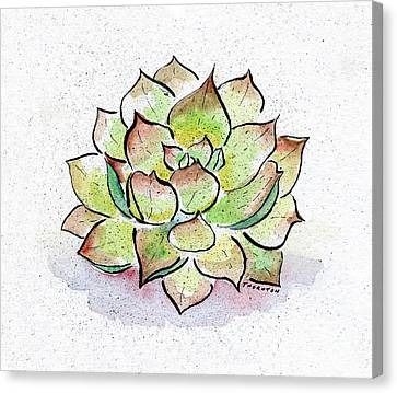 Succulent Canvas Print by Diane Thornton