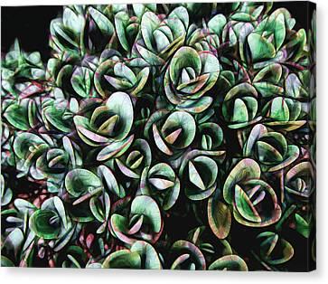 Succulent Fantasy Canvas Print by Ann Powell