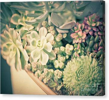 Canvas Print featuring the photograph Succulent Garden by Ana V Ramirez
