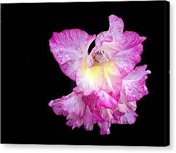 Succulent Gladiola Canvas Print