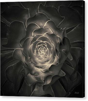 Succulent I Toned Canvas Print by David Gordon