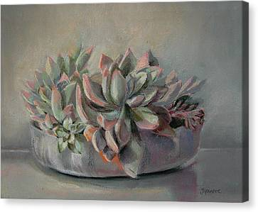 Succulent Canvas Print by Synnove Pettersen