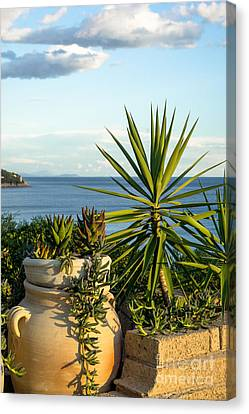 Succulents By The Sea Canvas Print