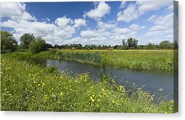 Sudbury Summer Meadows Canvas Print by Ian Merton