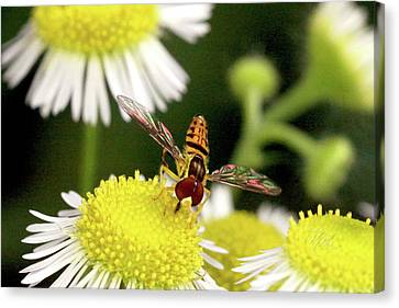Sugar Bee Wings Canvas Print