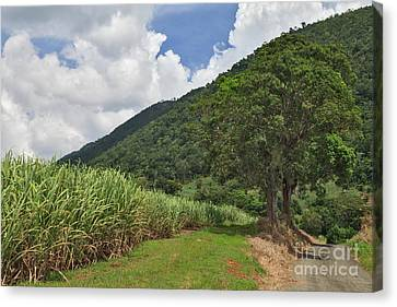Sugar Country Canvas Print by Charles Kozierok