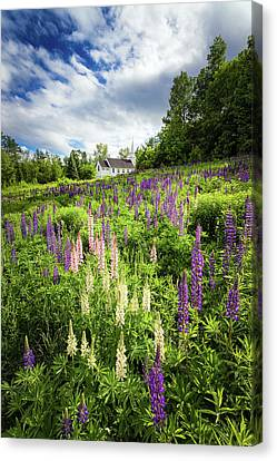 Canvas Print featuring the photograph Sugar Hill by Robert Clifford