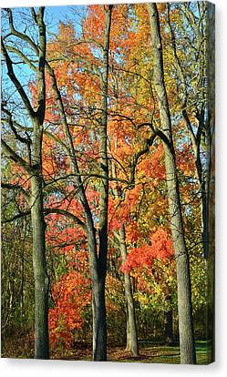 Canvas Print featuring the photograph Sugar Maple Brilliance by Ray Mathis