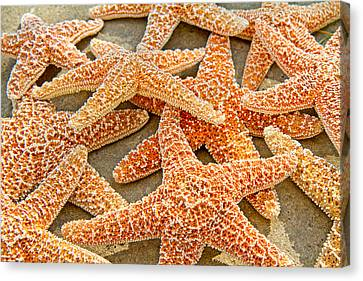 Sugar Starfish Canvas Print by Betsy Knapp