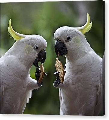 Sulphur Crested Cockatoo Pair Canvas Print by Avalon Fine Art Photography