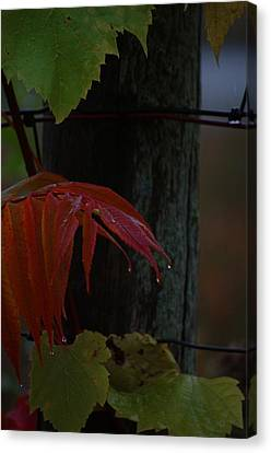 Sumac Canvas Print by The Stone Age