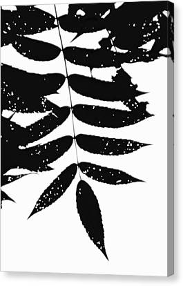 Sumac Canvas Print by Tim Good