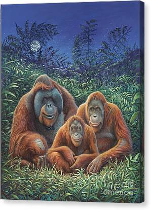 Sumatra Orangutans Canvas Print