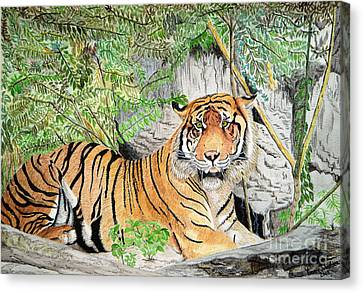 Sumatran Tiger Canvas Print by Yvonne Johnstone
