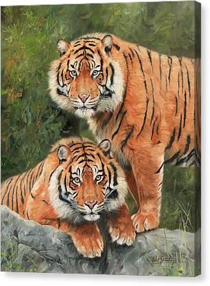 Sumatran Tigers Canvas Print by David Stribbling