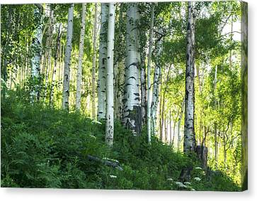 Canvas Print featuring the photograph Summer Aspen Forest by Tim Reaves