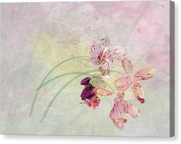 Summer Breeze Canvas Print by Rosalie Scanlon