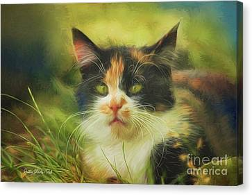 Canvas Print featuring the photograph Summer Cat by Jutta Maria Pusl